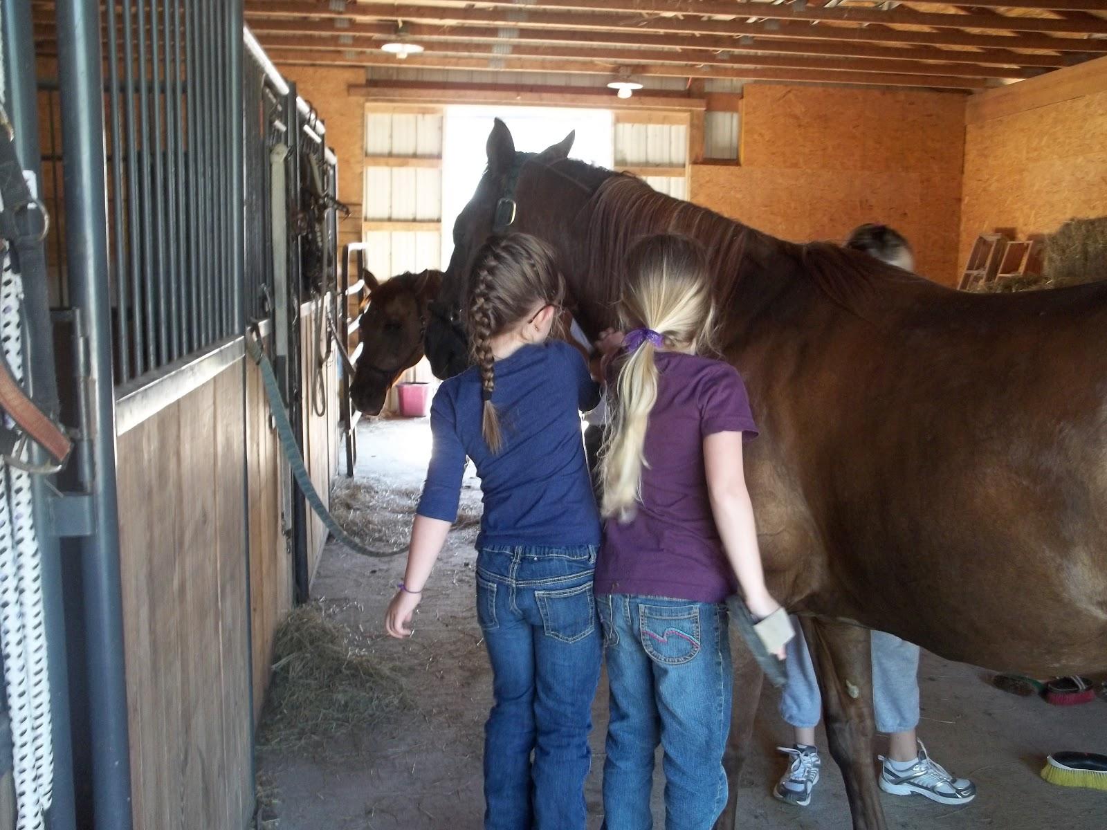 Kolonie konne – czy są bezpieczne?